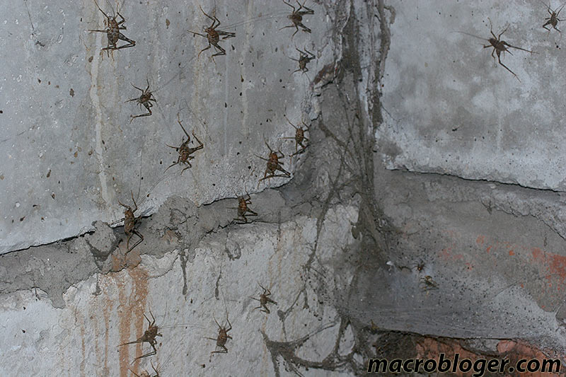 basement insects