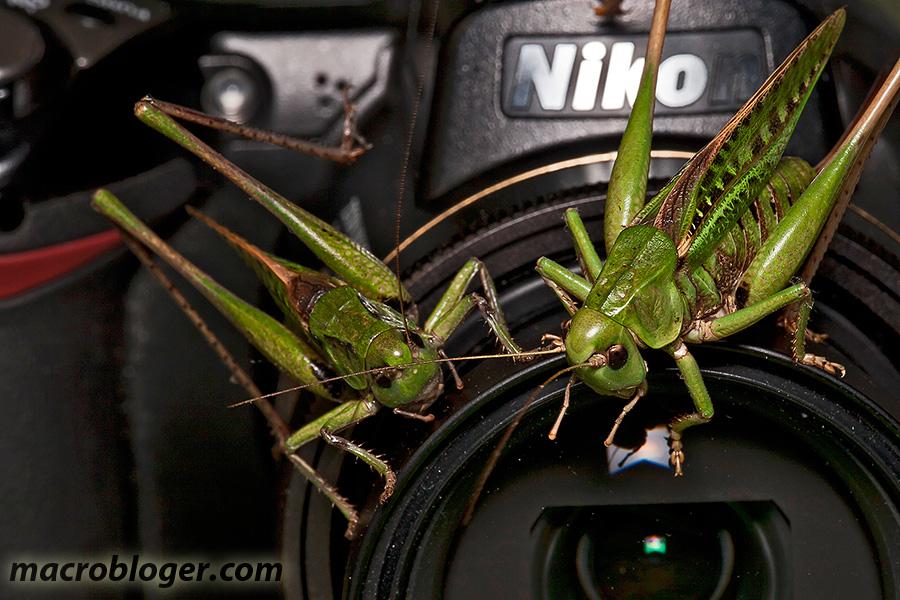 Кузнечики и Nikon
