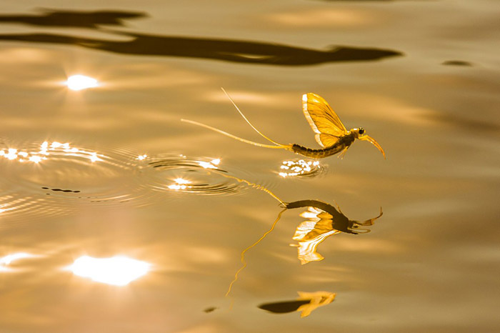 Ангел над речкой (Жержели Биро)