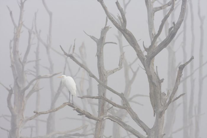 В тумане (Давид Грейо)