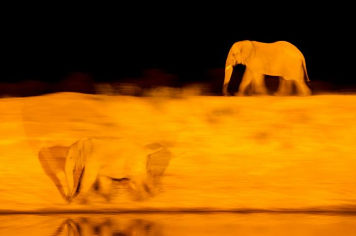 Ход слонов (Валерий Малеев)