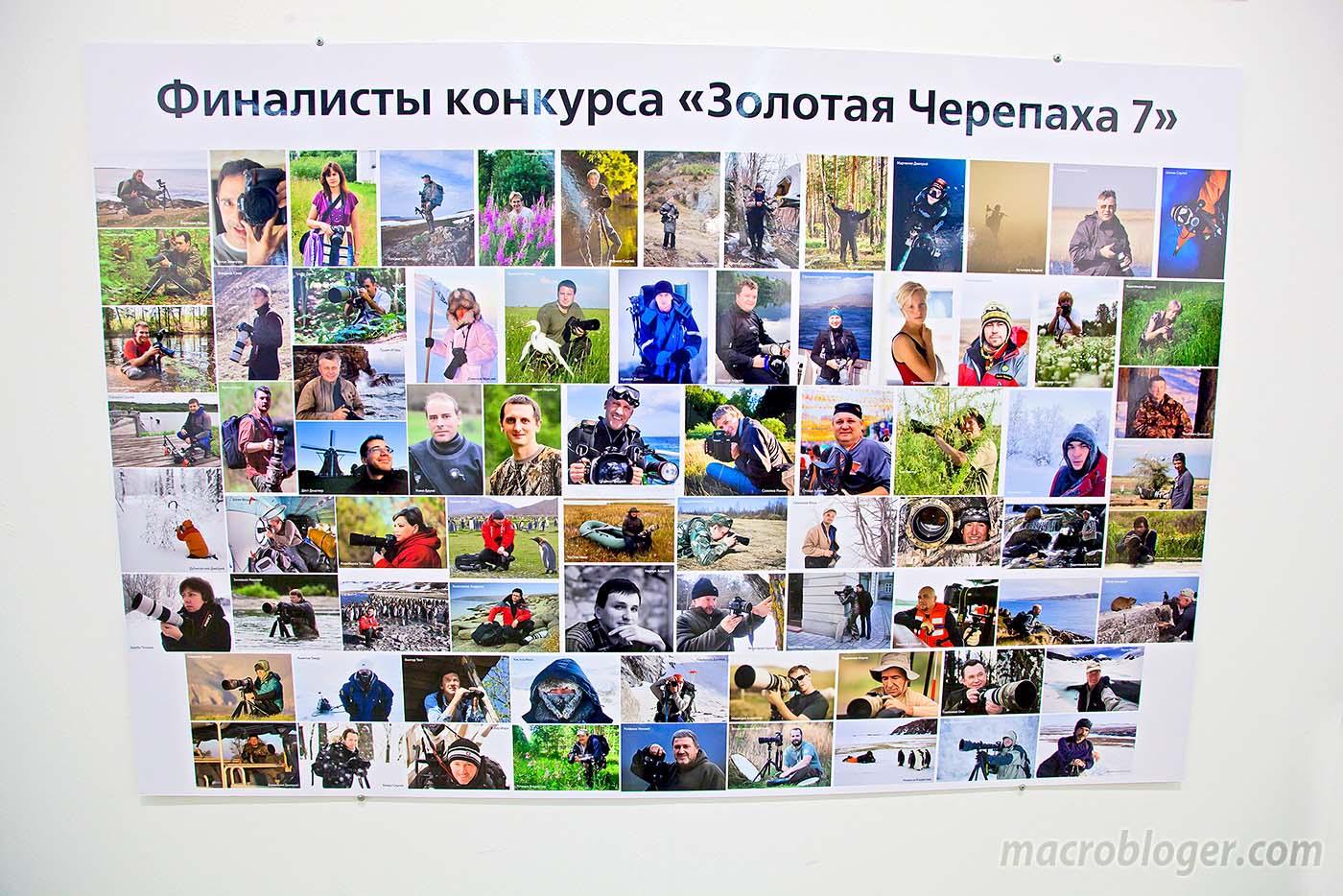 Золотая Черепаха 2012 (финалисты)